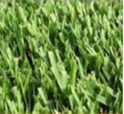 """תמונה של דשא - אלטורו (מחיר למ""""ר)"""