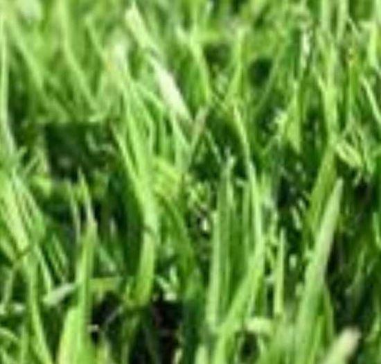 "Picture of דשא קוקויו (מחיר למ""ר)"