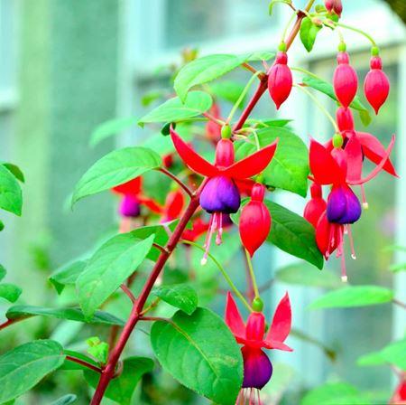 תמונה עבור הקטגוריה צמחים לצל וחצי צל