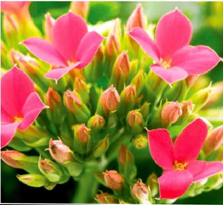 תמונה עבור הקטגוריה צמחים לבית, למשרד.
