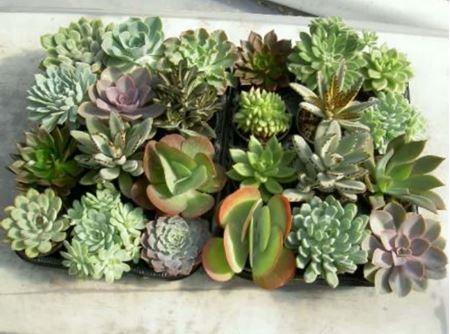 תמונה עבור הקטגוריה צמחים חסכוניים במים