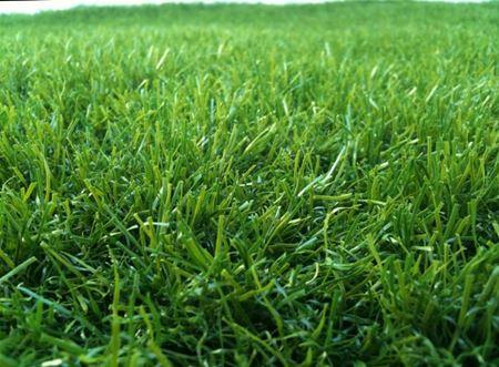 תמונה עבור הקטגוריה מרבדי דשא