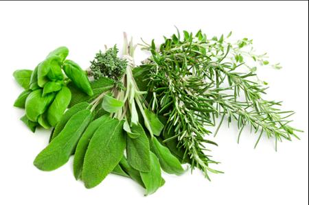 תמונה עבור הקטגוריה צמחי תבלין ומרפא