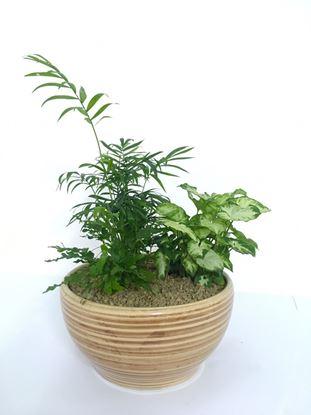 תמונה של מיקס צמחי בית